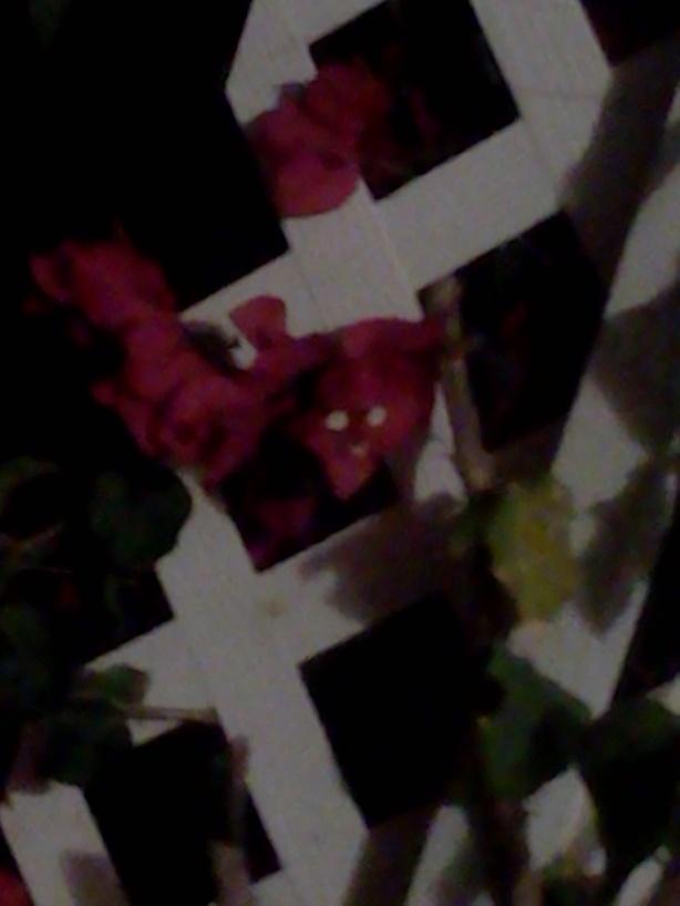 plantface2