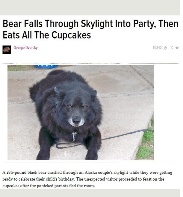 tard-dog-in-alaska